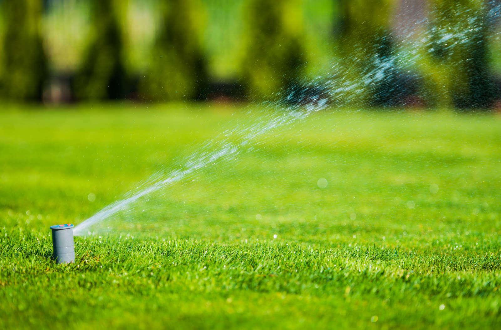 profesjonalne usługi ogrodnicze w btdm ogrody