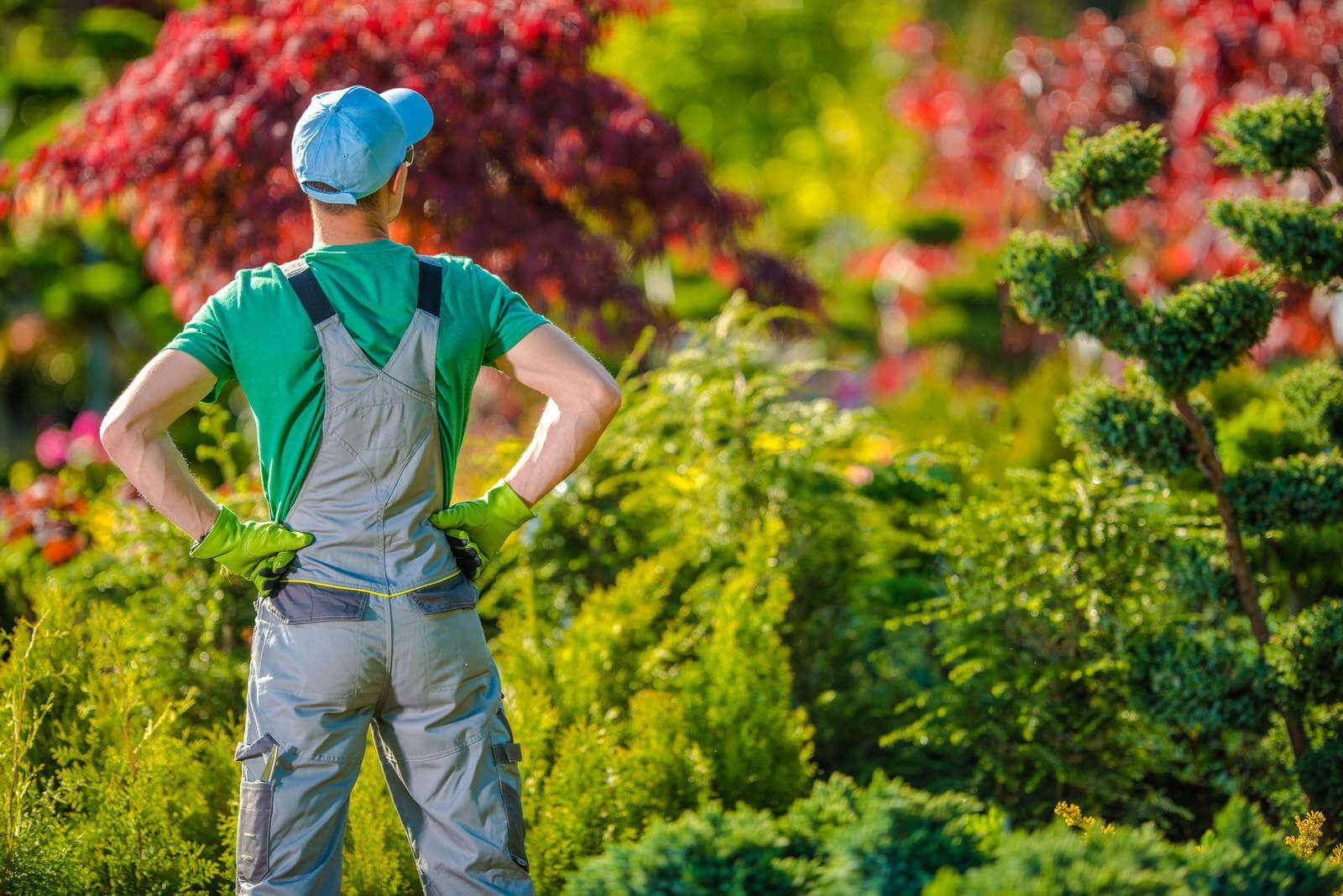 profesjonalna usługa pielęgnacji ogrodów w warszawie