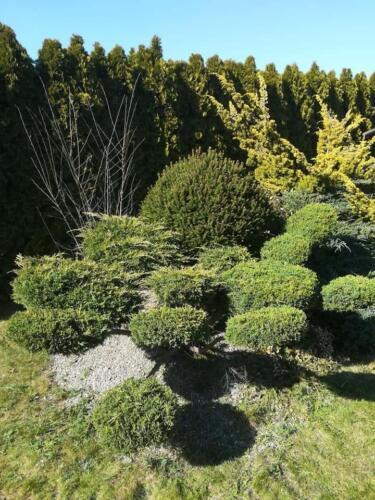 Karczowanie i cięcie roślin