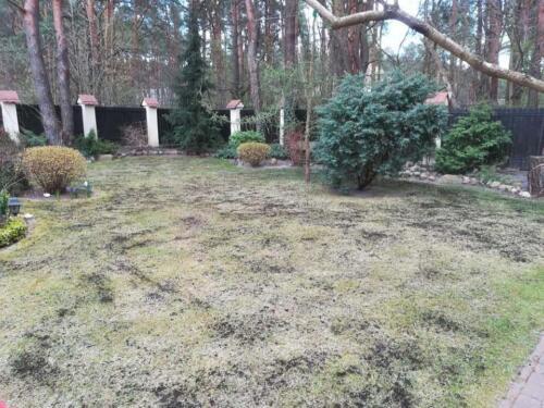 renowacja trawnika1
