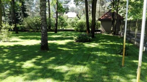 renowacja trawnika10