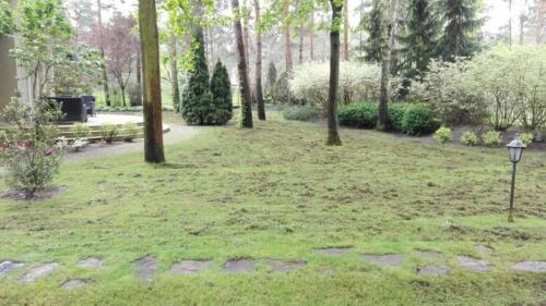 renowacja trawnika11