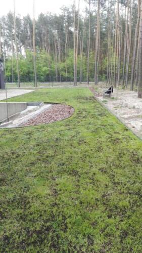 renowacja trawnika13