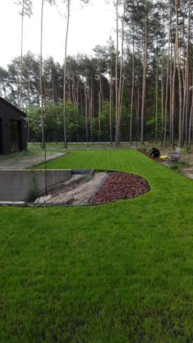 renowacja trawnika14