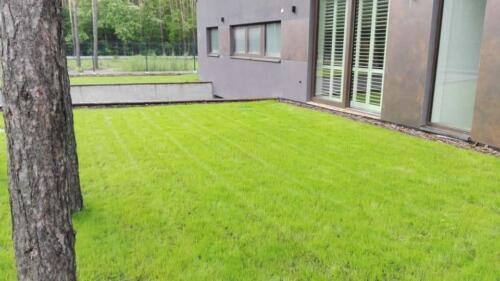 renowacja trawnika16