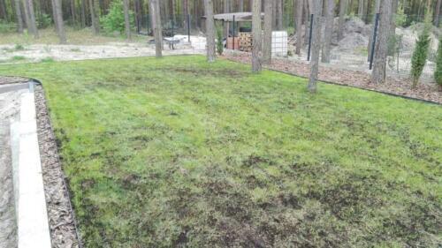 renowacja trawnika17