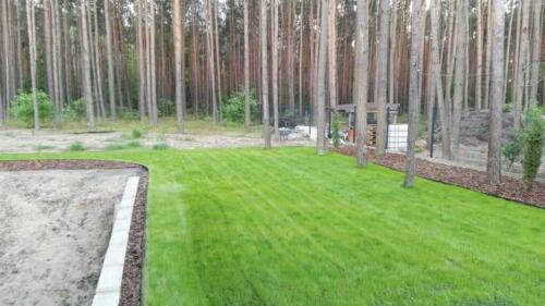 renowacja trawnika18