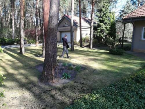 renowacja trawnika3
