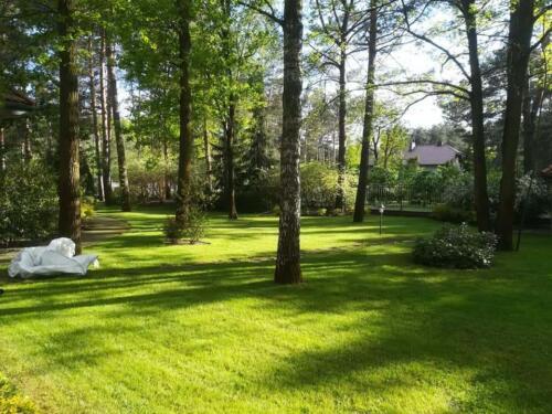 renowacja trawnika6