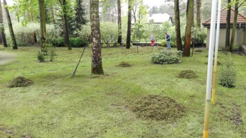 renowacja trawnika7