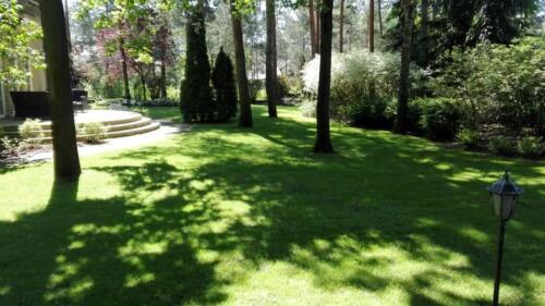 renowacja trawnika8
