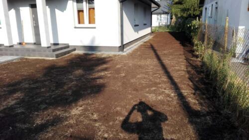 trawnik siany6