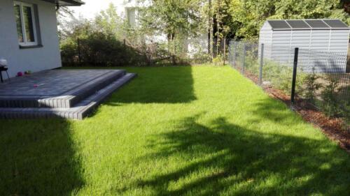 trawnik siany8
