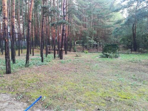 trawnik w lesie