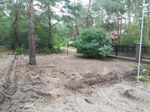 trawnik w lesie10