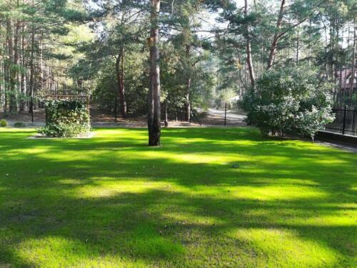 trawnik w lesie11
