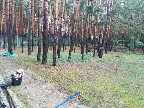 trawnik w lesie12