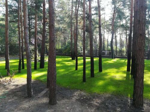 trawnik w lesie14