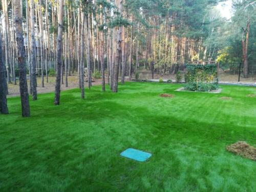 trawnik w lesie2
