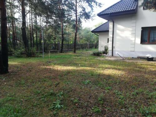 trawnik w lesie3