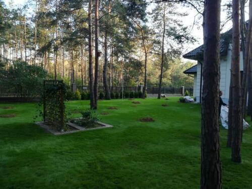 trawnik w lesie4