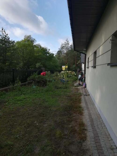 trawnik w lesie5